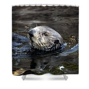 Sea Otter Shower Curtain