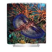 Sea Robin The Flying Gurnard Shower Curtain