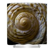 Sea Shell Beauty Shower Curtain