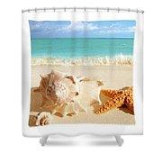 Sea Shell Seashell Clam Beach Decorative Square Zippered Throw Pillow Shower Curtain
