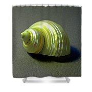 Sea Shell Turbo Marmoratus Shower Curtain