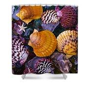 Sea Shells And Sea Glass Shower Curtain