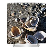 Sea Shells At Folly Beach In Charleston Sc Shower Curtain