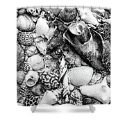 Sea Shells - Nassau, Bahamas Shower Curtain