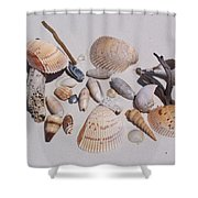 Sea Shells On White Sand Shower Curtain