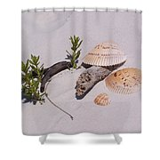Sea Shells With Drift Wood And Small Plants Shower Curtain