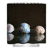 Sea Snails Shower Curtain
