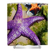 Sea Stars Shower Curtain