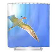 Sea Tern If I Were A Bird Shower Curtain