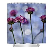 Sea Thrift Blossoms Shower Curtain by Rod Sterling
