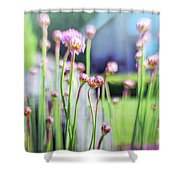 Sea Thrift Shower Curtain