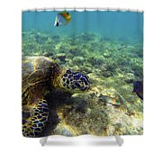 Sea Turtle #1 Shower Curtain