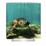Sea Turtle #3 Shower Curtain
