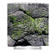 Sea Turtle Formation Shower Curtain