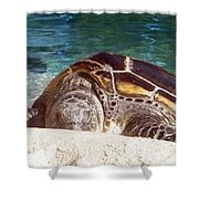 Sea Turtle Resting Shower Curtain