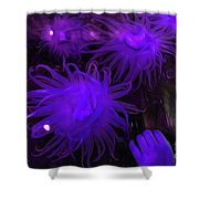 Sea Urchin 8 Shower Curtain