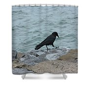 Seafaring Crow Shower Curtain