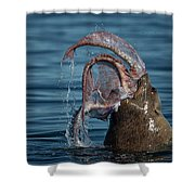 Seafood Diet Shower Curtain by Randy Hall