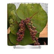 Seagrape Fruits Shower Curtain
