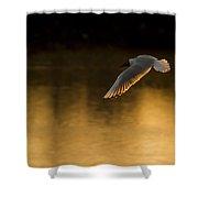 Seagul Shower Curtain