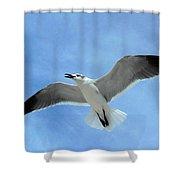 Seagull #1 Shower Curtain