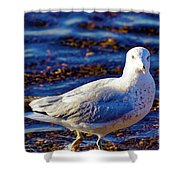 Seagull 1 Shower Curtain