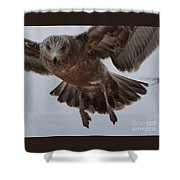 Seagull 2 Shower Curtain