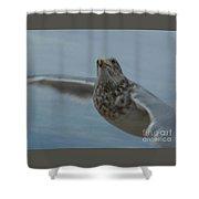 Seagull 4 Shower Curtain