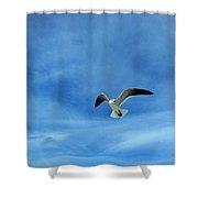 Seagull #5 Shower Curtain