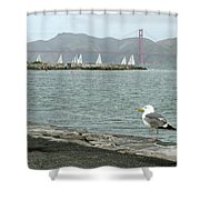 Seagull And Golden Gate Bridge Shower Curtain