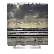 Seagull At Cannon Beach Shower Curtain