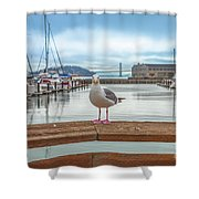 Seagull At Pier 39 Shower Curtain