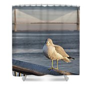 Seagull At Ravenel Bridge Shower Curtain