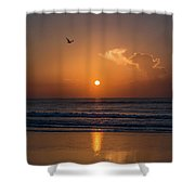 Seagull At Sunrise Shower Curtain