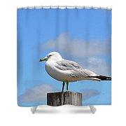 Seagull Beach Art - Sitting Pretty - Sharon Cummings Shower Curtain