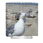 Seagull Bird Art Prints Coastal Beach Driftwood Shower Curtain