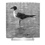 Seagull Black And White Shower Curtain