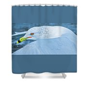 Seagull Departing Close-up Shower Curtain
