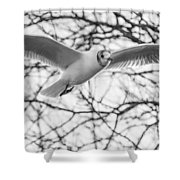 Seagull Fly By Trees Shower Curtain