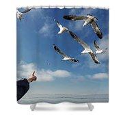 Seagull Flying Shower Curtain by Pradeep Raja PRINTS