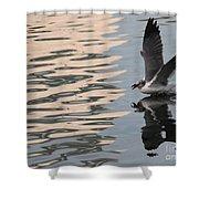 Seagull Fun Shower Curtain