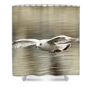Seagull Glide Shower Curtain