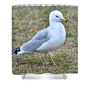 Seagull In Field Shower Curtain