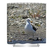 Seagull In Patagonia Shower Curtain