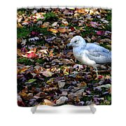 Seagull In The Fallen Leaves Shower Curtain
