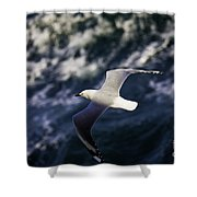 Seagull In Wake Shower Curtain