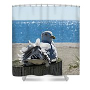 Seagull In Wind Shower Curtain