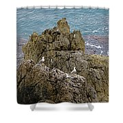 Seagull Island On Cefalu In Sicily  Shower Curtain