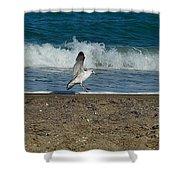 Seagull Landing Shower Curtain