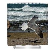 Seagull Landing Hutchinson Island, Fl Shower Curtain